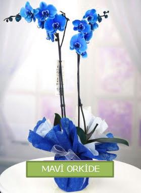 2 dallı mavi orkide  İstanbul Ümraniye çiçekçiler