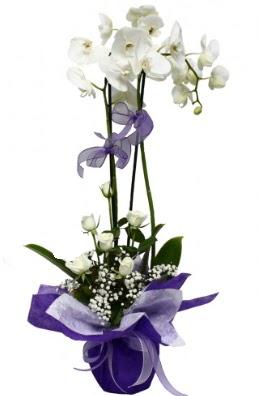 2 dallı beyaz orkide 5 adet beyaz gül  İstanbul Ümraniye çiçekçi mağazası