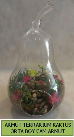 Cam Armut terrarium 5 kaktüs  İstanbul Ümraniye çiçek gönderme