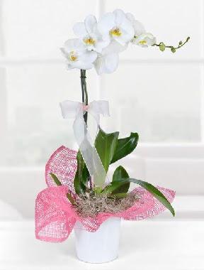 Tek dallı beyaz orkide seramik saksıda  İstanbul Ümraniye çiçek gönderme