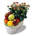 İstanbul Ümraniye İnternetten çiçek siparişi  meyva sepeti ve kalanche