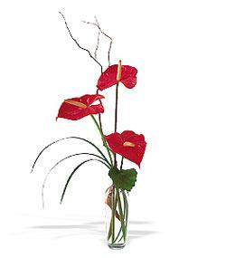 İstanbul Ümraniye çiçek siparişi sitesi  cam yada mika Vazoda 3 adet  antoryum
