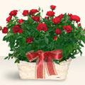 İstanbul Ümraniye İnternetten çiçek siparişi  11 adet kirmizi gül sepette