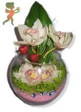 fanus içerisinde 4 orkide  İstanbul Ümraniye internetten çiçek satışı