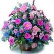 karisik mevsim kir çiçekleri  İstanbul Ümraniye çiçek gönderme sitemiz güvenlidir