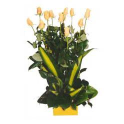 12 adet beyaz gül aranjmani  İstanbul Ümraniye kaliteli taze ve ucuz çiçekler