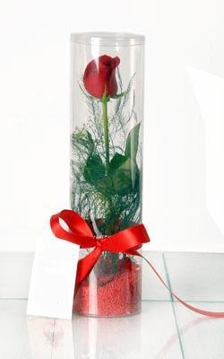 İstanbul Ümraniye çiçek yolla  Silindir vazoda tek kirmizi gül