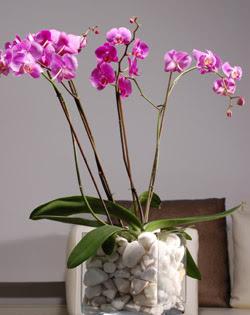 İstanbul Ümraniye çiçek siparişi sitesi  2 dal orkide cam yada mika vazo içerisinde