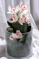 İstanbul Ümraniye internetten çiçek siparişi  Cam yada mika vazo içerisinde tek dal orkide