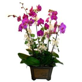 İstanbul Ümraniye cicek , cicekci  4 adet orkide çiçegi