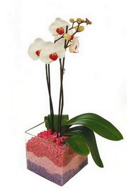 İstanbul Ümraniye uluslararası çiçek gönderme  tek dal cam yada mika vazo içerisinde orkide