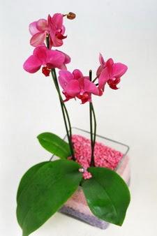 İstanbul Ümraniye çiçekçi mağazası  tek dal cam yada mika vazo içerisinde orkide