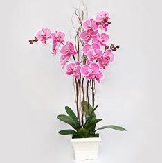 İstanbul Ümraniye cicekciler , cicek siparisi  2 adet orkide - 2 dal orkide