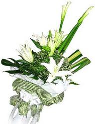 İstanbul Ümraniye güvenli kaliteli hızlı çiçek  3 dal kazablanka çiçegi ve yesillikler