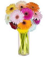 İstanbul Ümraniye internetten çiçek siparişi  Farkli renklerde 15 adet gerbera çiçegi