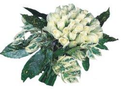 İstanbul Ümraniye internetten çiçek siparişi  9 Beyaz gül Özel kisiler için