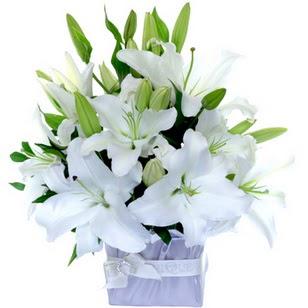 İstanbul Ümraniye çiçek yolla  2 dal cazablanca vazo çiçeği