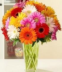 İstanbul Ümraniye çiçek servisi , çiçekçi adresleri  15 adet gerbera çiçek vazosu