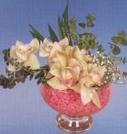 İstanbul Ümraniye çiçek mağazası , çiçekçi adresleri  Dal orkide kalite bir hediye