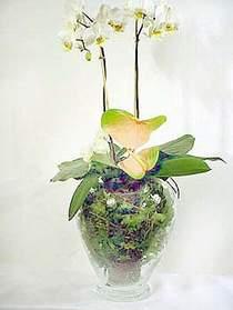 İstanbul Ümraniye çiçek satışı  Cam yada mika vazoda özel orkideler