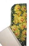 İstanbul Ümraniye çiçek gönderme  Kutu içerisine dal cymbidium orkide