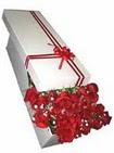 İstanbul Ümraniye çiçekçi telefonları  11 adet 1.kalite magnum güller