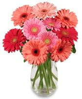 vazo içerisinde 13 adet gerbera çiçeği  İstanbul Ümraniye çiçek siparişi sitesi