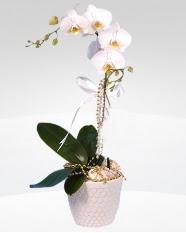 1 dallı orkide saksı çiçeği  İstanbul Ümraniye online çiçekçi , çiçek siparişi