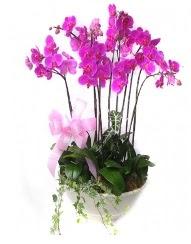 9 dal orkide saksı çiçeği  İstanbul Ümraniye güvenli kaliteli hızlı çiçek