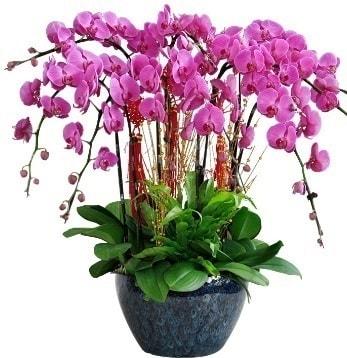 9 dallı mor orkide  İstanbul Ümraniye 14 şubat sevgililer günü çiçek