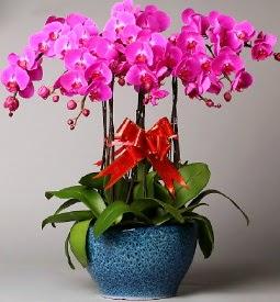 7 dallı mor orkide  İstanbul Ümraniye çiçek online çiçek siparişi