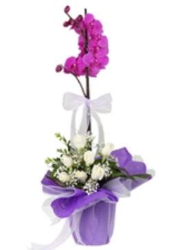 1 dal mor orkide ve 11 adet beyaz gül  İstanbul Ümraniye 14 şubat sevgililer günü çiçek