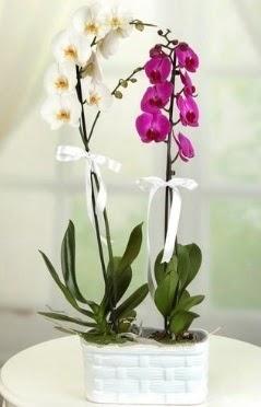 1 mor 1 dal beyaz İthal orkide sepet içerisinde  İstanbul Ümraniye çiçek mağazası , çiçekçi adresleri