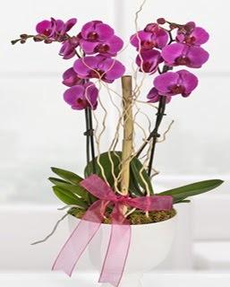 2 dallı nmor orkide  İstanbul Ümraniye anneler günü çiçek yolla