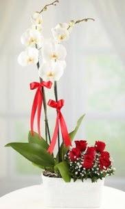 2 dallı beyaz orkide ve 7 kırmızı gül  İstanbul Ümraniye hediye çiçek yolla