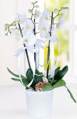 3 dallı beyaz orkide  İstanbul Ümraniye çiçek yolla