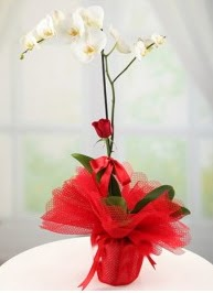 Tek dal beyaz orkide tek dal kırmızı gül  İstanbul Ümraniye internetten çiçek satışı