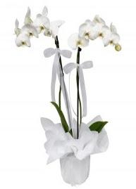 2 dallı beyaz orkide  İstanbul Ümraniye güvenli kaliteli hızlı çiçek