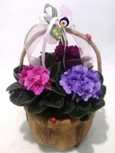 Sepet içerisinde 3 adet menekşe  İstanbul Ümraniye anneler günü çiçek yolla