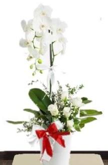 Tek dallı beyaz orkide 5 beyaz gül  İstanbul Ümraniye çiçek siparişi sitesi