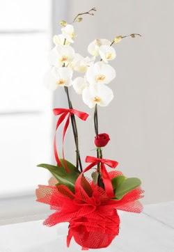 2 dallı beyaz orkide ve 1 adet kırmızı gül  İstanbul Ümraniye anneler günü çiçek yolla