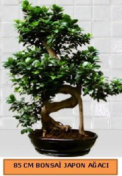 85 CM Japon ağacı Bonsai saksı bitkisi  İstanbul Ümraniye ucuz çiçek gönder