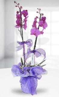 Çift dallı mor orkide LİKE MARKADIR  İstanbul Ümraniye anneler günü çiçek yolla