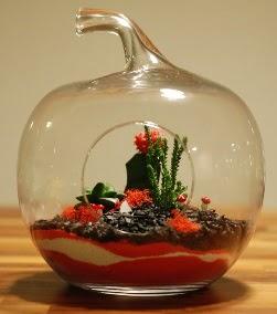 Elma Terrarium 3 kaktüs orta boy  İstanbul Ümraniye 14 şubat sevgililer günü çiçek
