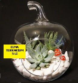 5 kaktüslü Elma terrarium orta boy  İstanbul Ümraniye online çiçek gönderme sipariş
