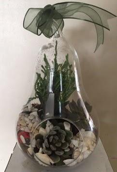 Orta boy armut terrarium 3 kaktüs  İstanbul Ümraniye güvenli kaliteli hızlı çiçek