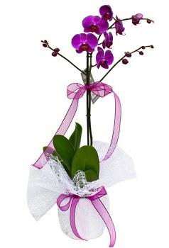Tek dallı mor orkide  İstanbul Ümraniye çiçekçi telefonları