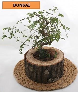 Doğal ağaç kütük içerisinde bonsai bitkisi  İstanbul Ümraniye çiçek gönderme sitemiz güvenlidir