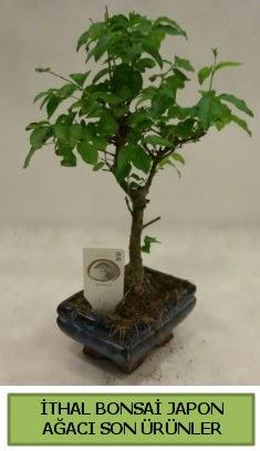 İthal bonsai japon ağacı bitkisi  İstanbul Ümraniye hediye sevgilime hediye çiçek