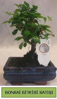 Bonsai ithal görsel minyatür japon ağacı  İstanbul Ümraniye ucuz çiçek gönder